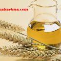 buğday yağının faydaları, buğday yağının saça faydaları, buğday yağının saç bakımında yeri