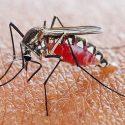 sivri sineklerden korunma, sivri sineklerden nasıl korunur, sivri sineklerden b1 vitamini ile korunma