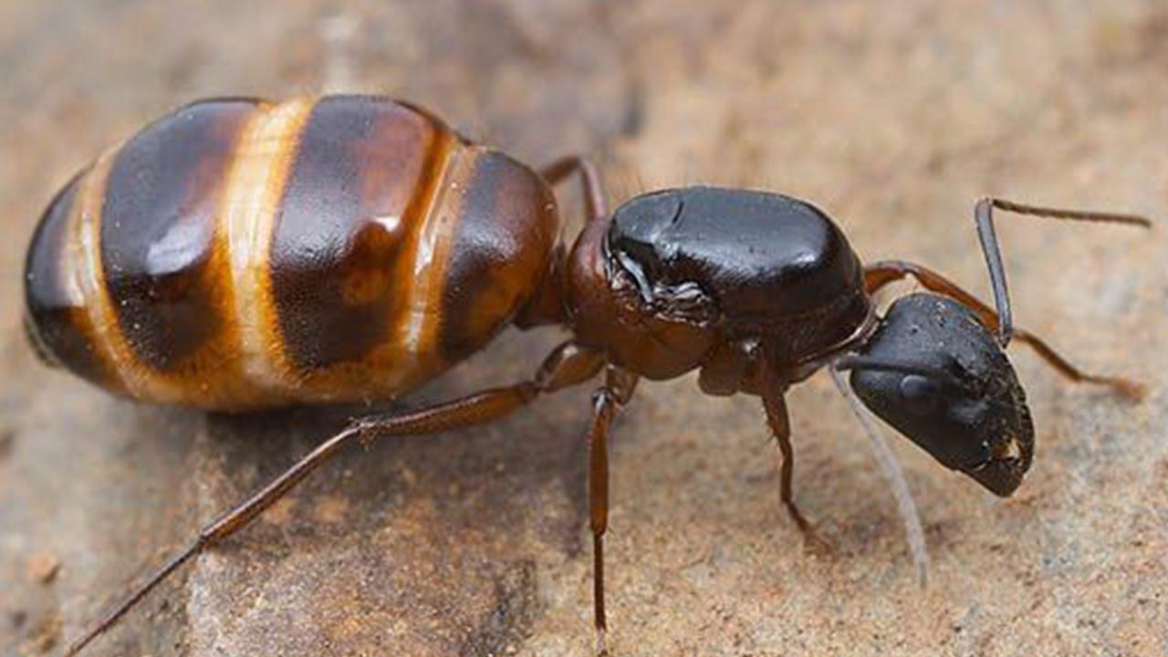 fare ilaçlama, karınca ilaçlama, karınca nasıl ilaçlanır